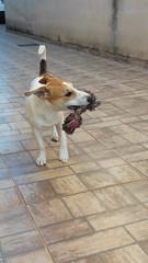 20141102_074745 (CaminhaCão) Tags: dogdaycare catsitter doghotel petsitter hotelparacães crecheparacães hoteldecachorro crechedecachorro babádeanimais