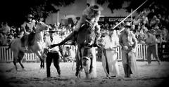 El patiador (Eduardo Amorim) Tags: horses horse southamerica criollo caballo uruguay cheval caballos cavalos prado montevideo pferde cavalli cavallo gauchos pferd chevaux gaucho  amricadosul montevidu uruguai gacho amriquedusud  gachos  suramrica amricadelsur sdamerika crioulo caballoscriollos criollos jineteada  americadelsud gineteada crioulos cavalocrioulo americameridionale caballocriollo campeiros campeiro eduardoamorim cavaloscrioulos pasomolinosudamrica
