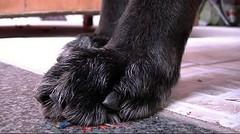 1458 (Jasper Kyodaina) Tags: man guy feet giant paw trampled squish sole stomp crush giantess trample walkover