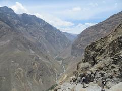 Colca Canyon-5