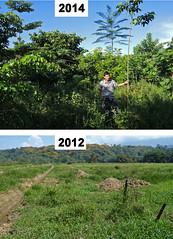 Ein neuer Regenwald
