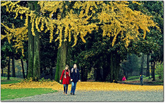 Vision. (rogilde - roberto la forgia) Tags: street autumn parco love foglie carpet gold autunno inlove monza villareale rogilde goldcarpet robertolaforgia