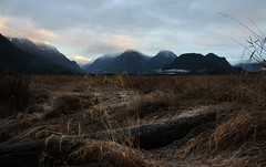 Painted Winter ('Dazza' Quarin...back from the Dead) Tags: winter snow canada mountains grass log britishcolumbia pittmeadows