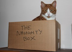Naughty Charlie (Stuart Axe) Tags: pet cats pets cat ginger box tabby kitty charlie freddie marmalade polydactyl polydactylcat tomcat gingercat tabbycat marmaladecat gingertom petportraits polydactyly catsandboxes hemingwaycat kissablekat bestofcats gingertomcat catmoments charlieandfreddie friendsofzeusphoebe thenaughtybox