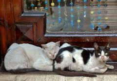 Street cats, Cairo (stevelamb007) Tags: two cat d70s egypt cairo feral streetcats stevelamb