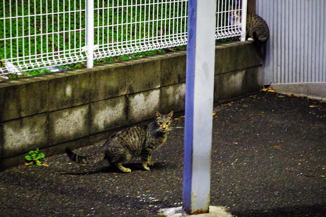 Today's Cat@2015-01-11