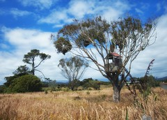Cool treehouse find while driving in New Zealand. (cboucher) Tags: newzealand tree grass children relax climb photo picnic play treehouse hide hiding hideout landscapephotography