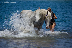 Horse (wil_sul) Tags: blue sea wild portrait sky horse lake water girl grey splash narrabeen infocus highquality 68will