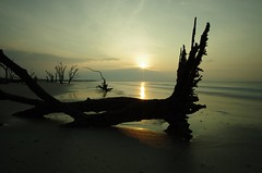 Sunrise at The Boneyard (MickMo10) Tags: ocean seascape tree beach sc sunrise photography bay long exposure pentax south roots atlantic filter nd carolina botany 15mm density edisto neutral k5ii