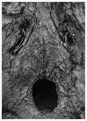 """""""I'm tired"""" : 34/210 (westen groh photography) Tags: park county abstract tree face wisconsin point maple sugar bark fox milwaukee doctors"""