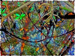 Mangrove Reflections (Kevin B Photo) Tags: kevinbarry
