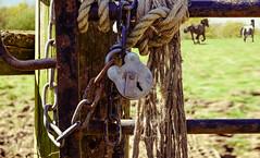 safely locked-up (gian_tg) Tags: ranch horse texture fence chains gate sunny rope locks flickrfriday fujixt1 xf50140mmf28rlmoiswr fujixf50140mm 7dwf