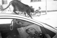 Italy, Trieste (Epsilon68 - Street and Travel Photography) Tags: street travel urban blackandwhite bw italy monochrome blackwhite fuji ngc it fujifilm trieste friuliveneziagiulia noireblanc fujix fujixt1