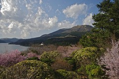 Lake in the spring (tez-guitar) Tags: trees lake flower tree water cherry spring pentax blossoms petal bloom cherryblossom sakura hakone pentaxart