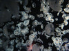 "Moon Jelly (""Aurelia Aurita""), Monterey Bay Aquarium, Monterey, California, USA (jimg944) Tags: california aquarium mba monterey jellies jellyfish montereybayaquarium montereybay moonjelly mbari aureliaaurita"