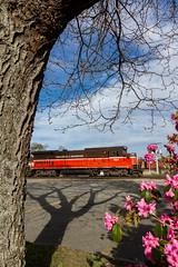 Springtime on the P&W (Ryan J Gaynor) Tags: railroad flowers tree train spring massachusetts railway trains railfan worcester pw railroading providenceworcester