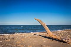 Mare (SDB79) Tags: panorama marina mare blu natura cielo tronco spiaggia molise petacciato