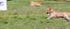 16-05-15_untitled_137 (Daniel.Lange) Tags: dog philadelphia dogs buster dogdayafternoon spado columbussquarepark