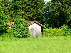 DSC03816 (Mr.J.Martin) Tags: tusslingbavaria bayren germany gapp garden canal village church wildflowers