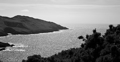 Views of morte point (Sazzaheaton) Tags: sea white plant black tree beautiful contrast coast waves horizon calming calm sparkling froth contast