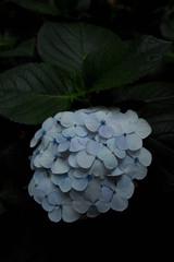 SDIM1697 (uekich) Tags: flower iso100 sigma   foveon  sd15  619