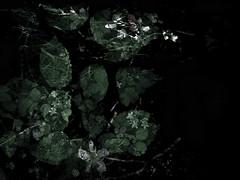 170616-4-1 (chrisfriel) Tags: flowers grave memorial friel
