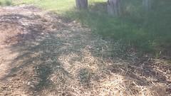 Utility Site Terraforming (Final)l) (NerdAcres) Tags: grass site earth seed straw utility dirt preparation prep watering earthwork 2016 seeding terraforming