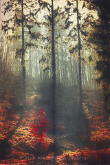 weight of light (Dyrk.Wyst) Tags: morning trees light red sky mist painterly rot texture nature leaves silhouette vertical fog backlight forest sunrise germany landscape deutschland licht spring haze mood nebel outdoor fineart natur noone peaceful atmosphere berge dreamy colourful conceptual landschaft wald bume sonnenaufgang bergischesland schatten shrubs atmosphre impressionistic stimmung firs frhling gegenlicht dunst tannen malerisch creativephotography society6 redbubblelicencerf