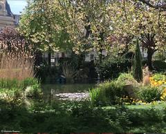 jardin magnifique+ (alexandrarougeron) Tags: nature arbre environnement ville urbain vgtal france vert feuille vie branche naturelle