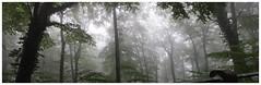 Forest near Rhine River (na_photographs) Tags: wald trees bume fog rain nebel mist haze