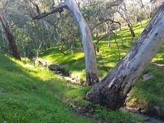 20160716_144228 (StephenMitchell) Tags: adelaidegreenhills nature organic trees gully valley hill mountain blackwood belair edenhills southaustralia trek walk creek rock stone