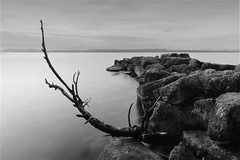 By the lake - Long exposure (Rogg4n) Tags: lake blackandwhite longexposure neuchtel landscape canoneos100d nd filter efs1018mmf4556isstm suisse switzerland melancholic seascape waterscape tree water minimalism sky clouds quiet lacdeneuchtel hama bw