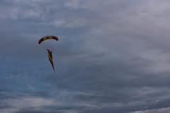 Abanderado (Mathias Bra) Tags: paracaidista bandera espaa ejercito