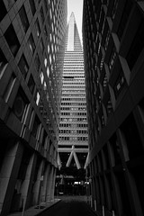 The Line In Between (marq4porsche) Tags: san francisco california united states transamerica building archetecture buildings skyline black white bw contrast bright monochromatic city urban sf canon eos 6d 1635 f4 lens downtown line between skyscraper street