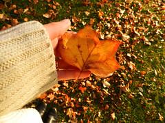 Comfy Autumn Leaves (Alien Encounter) Tags: warm comfy autumn fall season seasonal nature outdoors leaf leaves nikon coolpix p500