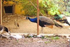 (CaledoniaEHanson) Tags: shadyladybedandbreakfast shady lady bed breakfast peacock nevada brothel