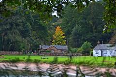 (Zak355) Tags: rothesay isleofbute bute scotland scottish trees