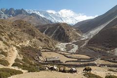 Morning in the Himalayas (D A Scott) Tags: himalayas nepal asia mountains trekking everest base camp gokyo lakes trek