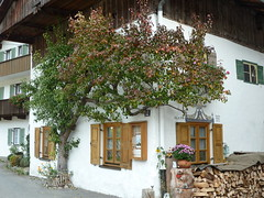 Mittenwald - Bayern (manuela1970) Tags: bayern herbst berge sonne wandern mittenwald birnbaum