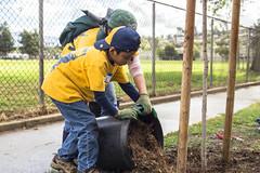 Arleta Park Tree Care (TreePeople) Tags: david tree cub gonzales deep drought scouts care mulch watering response arleat