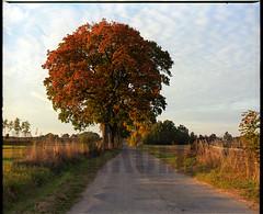 6a Kopie (stuartkul) Tags: color mamiya kodak mazury polska scan 6x7 selbst ektar 100iso kolor rb67 mamiyarb67 c41 skan drzewa entwickeln jesien nikon9000ed tetenalc41 ektar100 samwywolany