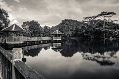 Reflection (Ng Shu Yuan) Tags: blackandwhite reflection river landscape pond nikon malaysia eco sabah bnw waterscape longexposures sabahan balung nikond7000 ecoriver lazyshutters