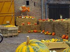 2014-10-20 Kremmen 02 (dks-spezial) Tags: brandenburg oberhavel scheunenviertel kremmen