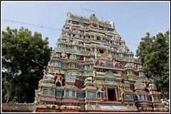 4788 - Saptha Sthana Sthalangal Series 09 (chandrasekaran a 32 lakhs views Thanks to all) Tags: flowers india heritage fruits architecture temple rice culture traditions temples jewels hinduism tamilnadu ghee gopurams thiruvaiyaru arulmigu kandiyur sundarar  thevaram sotruthurai  aiyarappan panchanatheeswarar poonthuruthi sapthasthanasthalangal vedikudi  vedicpandits sevensacredtemples thiruvaiyarutemple neithanam pazhanam