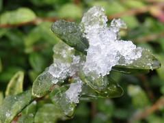 Teeny, tiny bit of snow (Landanna) Tags: winter snow vinter sneeuw sne teenytinybitofsnow