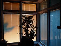 setting sun light 11022014 (2) (Ange 29) Tags: windows light sun canada tree silhouette reflections king shadows olympus blinds venetian setting township omd em1 zd 1435mm