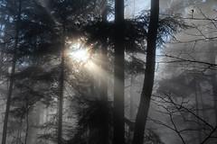 forest deep  (cyberjani) Tags: sun nature fog forest ray slovenia cave rakitna vihrenica