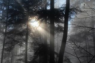 forest deep ✿