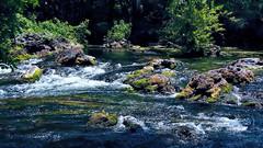 Class II rapids, Hillsborough River State Park, Tampa, Florida, U.S.A. (Jorge Marco Molina) Tags: park county nature sunshine river tampa rocks state florida class rapids ii hillsborough