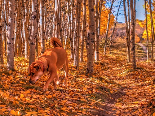Roxy at Cougar Ridge